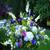 Butterfly Garden (SA2047)