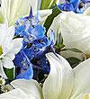 blue-white.jpg