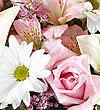 pink-white.jpg