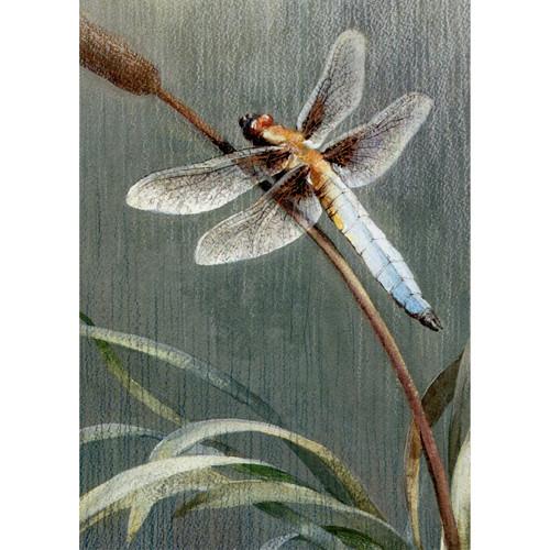 Dragonfly Card (Sympathy Message)