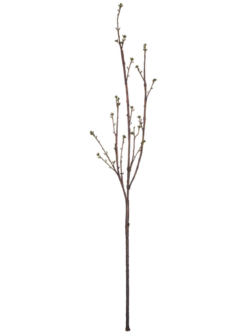 Bud Branch