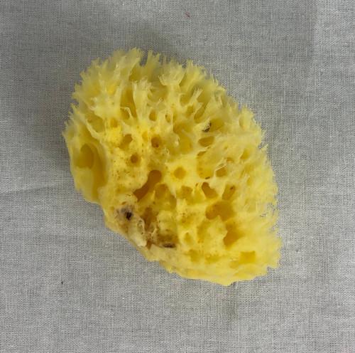 Baptismal sponge