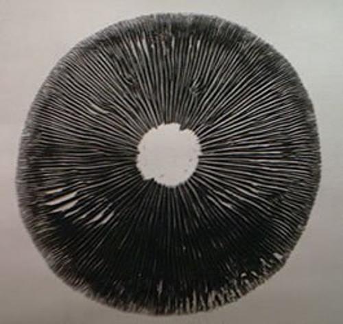 Chile Spore print