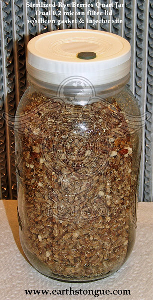 7 JARS OF STERILIZED RYE GRAIN IN QUART JARS WITH DUAL MICRON FILTER LID AND INJECTOR SITE