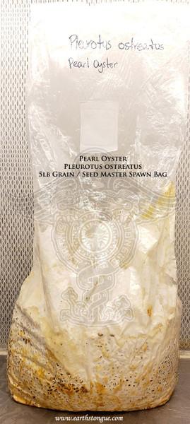 Pearl Oyster Pleurotus ostreatus Master Grain Seed Spawn