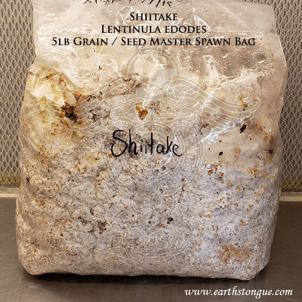 Shiitake Lentinula edodes Master Grain Seed Spawn Wide Weather Range
