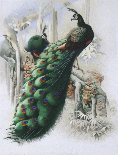 King Silk Art  Wildlife Bird Peacock Courtship 71018