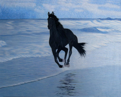 King Silk Art Wildlife Black Horse  on the Beach 74073