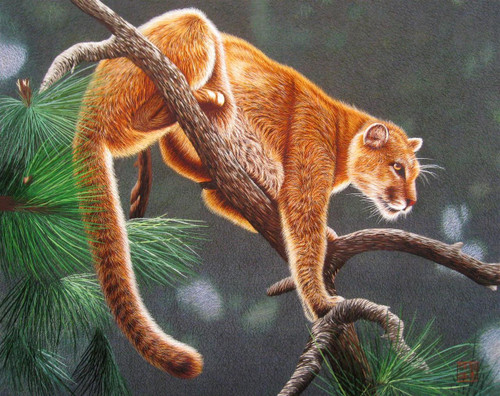 King Silk Art  Wildlife Mountain Lion 74090