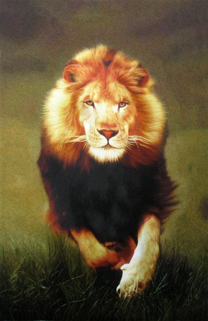 King Silk Art Wildlife  African Animal Running Lion 4050 74101