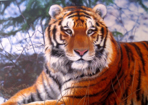 King Silk Art Wildlife Animal Bengal Tiger on Guard 74120