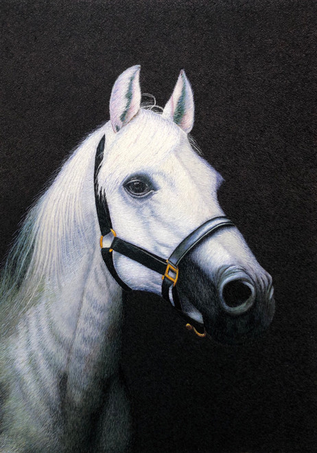King Silk Art  Wildlife White Horse 74149