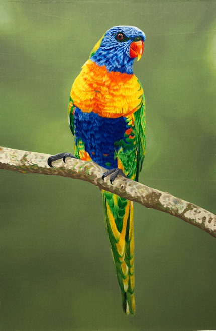 King Silk Art  Wildlife Birds Lorikeet 71071