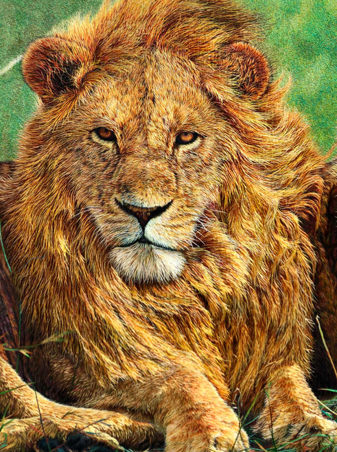 King Silk Art  Wildlife Lion 74074