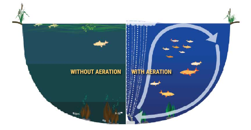 Notice the importance of having aeration in your pond.