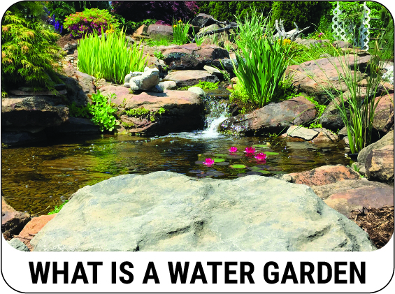 Learn what a water garden and backyard pond is - CLICK HERE!