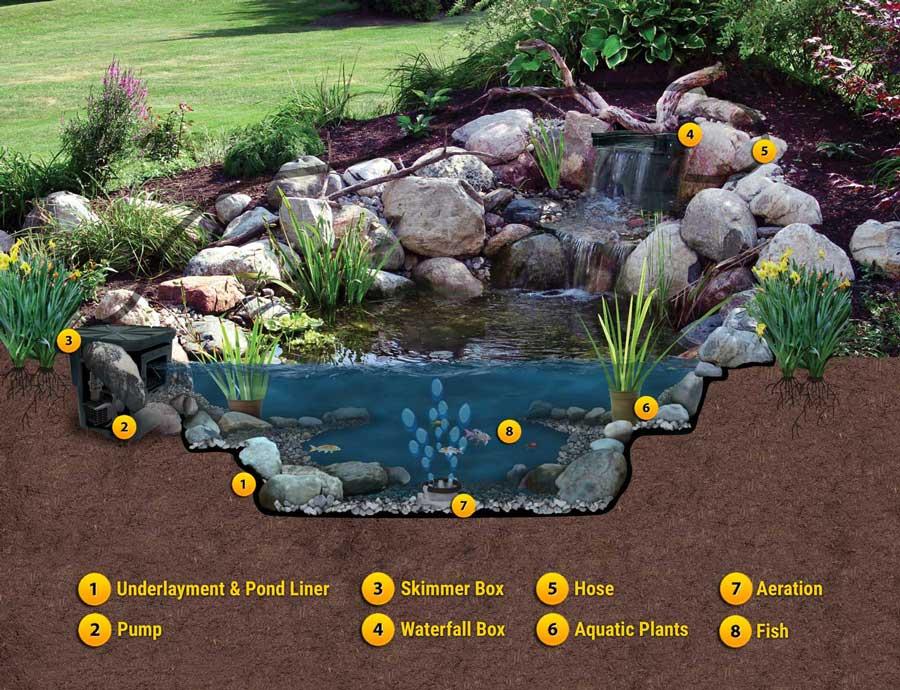 Parts of a backyard pond diaghram