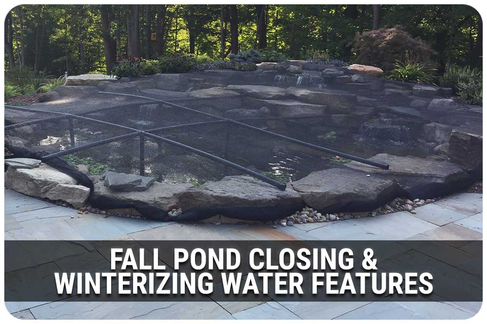 Learn the components of backyard ponds and water gardens.