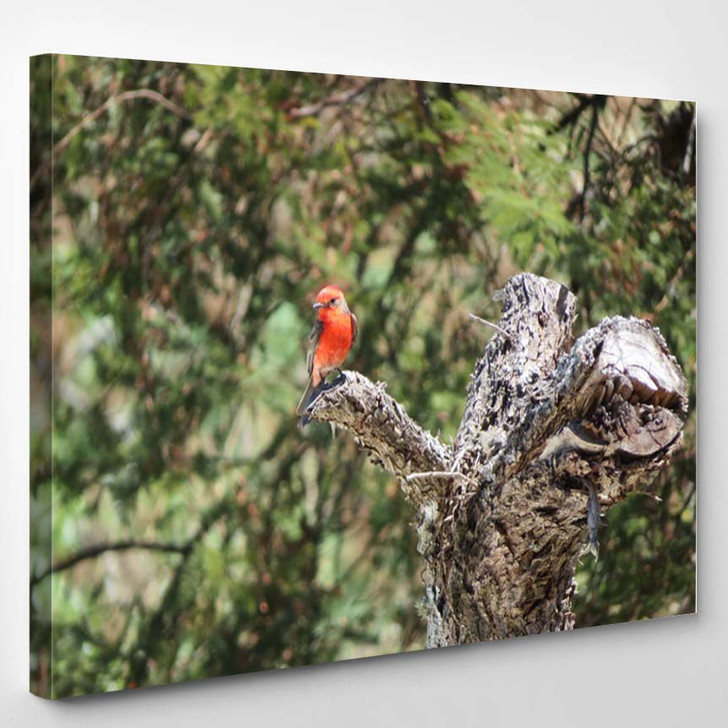 Beautiful Sweet Red Colored Bird Sitting - Canvas Wall Art