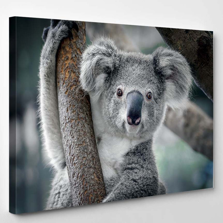 A Cute Koala - Animals Canvas Wall Art