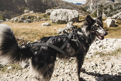Hurtta X-Sport Dog Harness