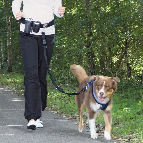 Trixie Hands Free Running Waist Leash