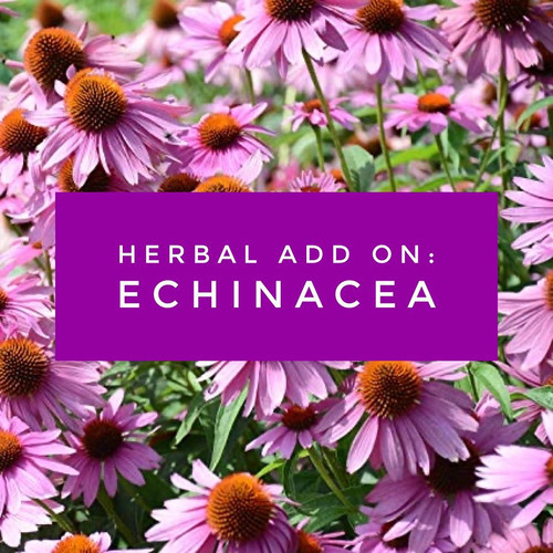 Echinacea Herbal Add On