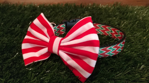 a soft red  and white bow tie on a red and green Chevron ribbon collar. Very fetching for the Festive season