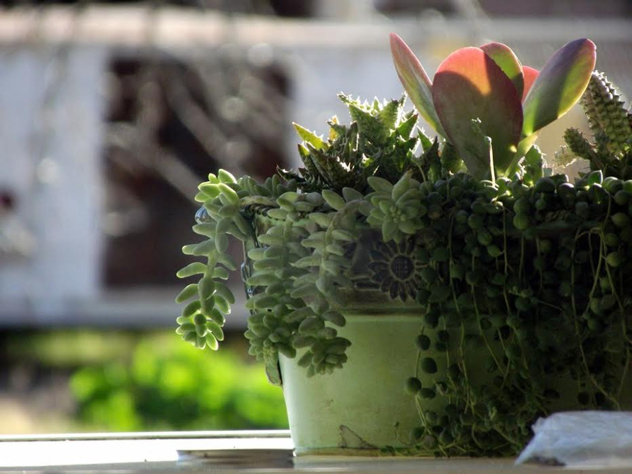 Turn Your Home or Office into an Oasis with Houseplants