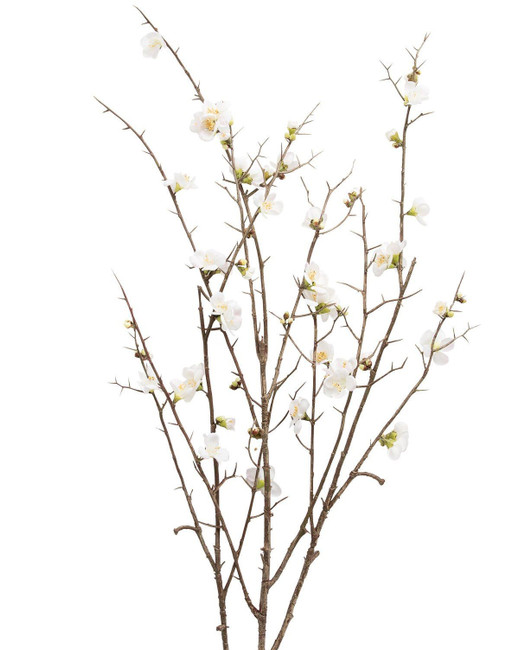 Quince White 3-4' seaberry(5st)