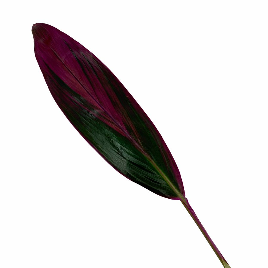 Leaves Ti Red