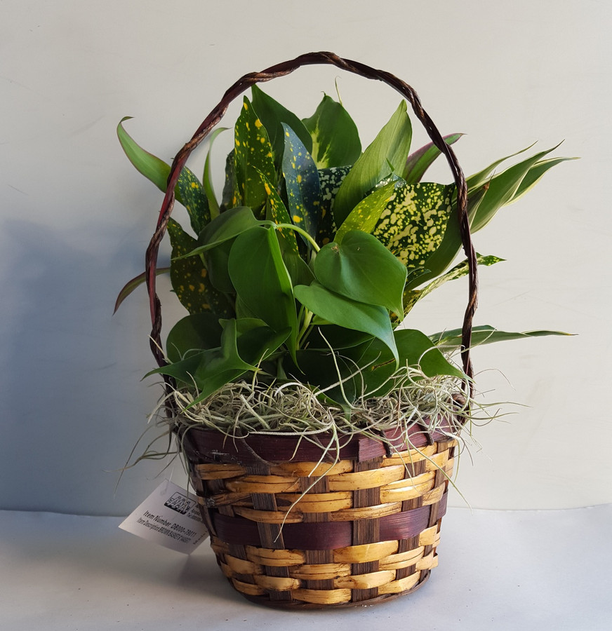"6"" BASKET DISHGARDEN"