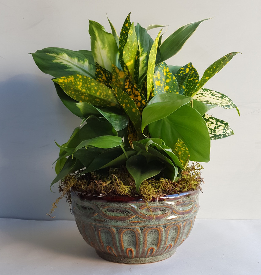 "6"" CERAMIC DISHGARDEN"