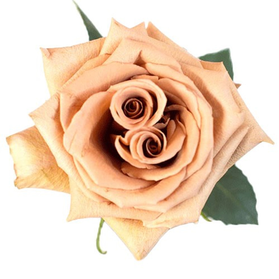 Rose Toffee holl