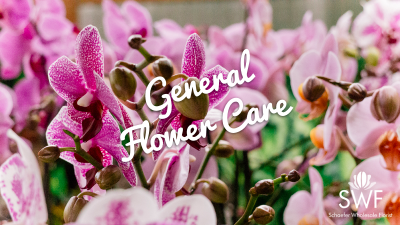 General Flower Care