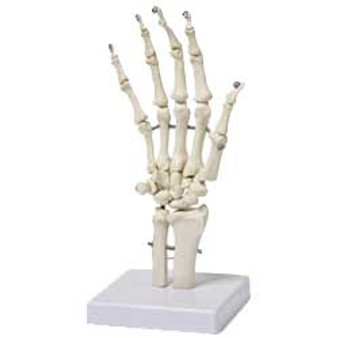 """Walter Products Hand Skeleton 4.5x4.5x10"""""""