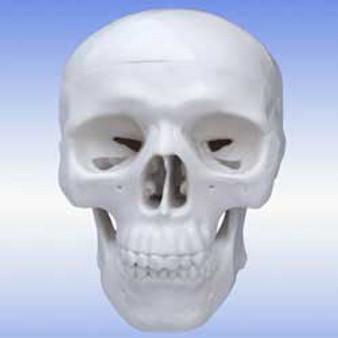 Walter Products Mini Human Skull 3x4x4