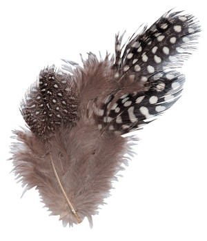 Guinea Fowl Feathers - Natural (10g)