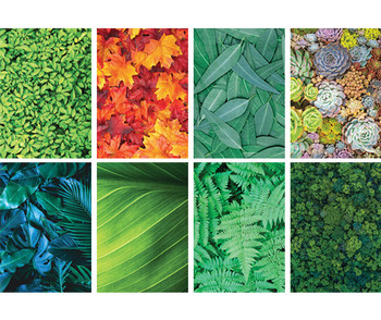 Pattern Paper - Foliage (Pack of 40)