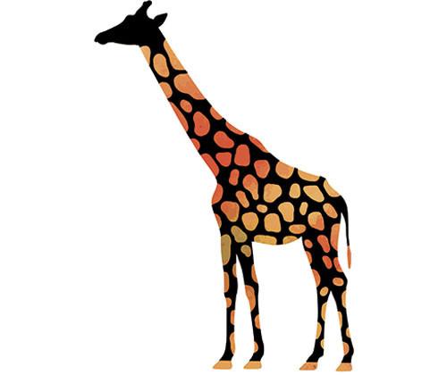 Scratch Wild Animal - Pack of 24