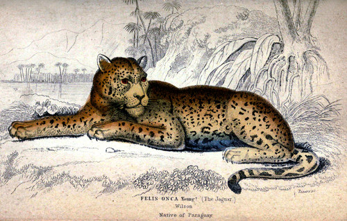 Antique Animal Prints - For Standard & Large Format Printers (Download)