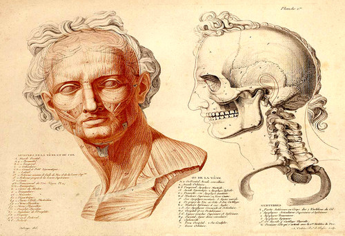 Antique Anatomy Illustrations for Print-Making (Download)