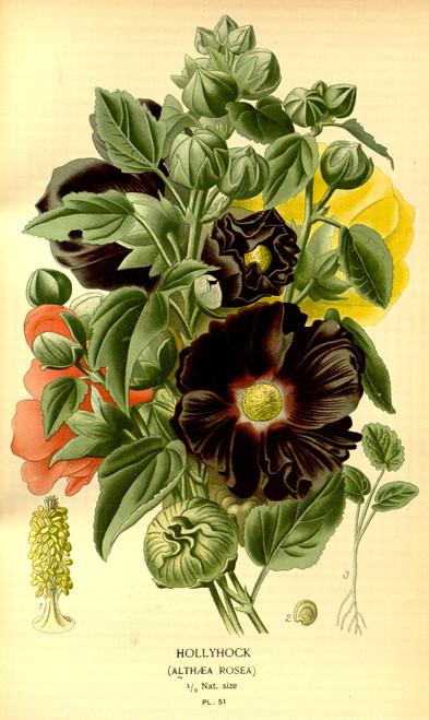 ANTIQUE FLOWER PRINTS 250 High Res. Print-Making Images - Download