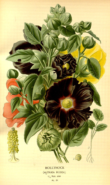 ANTIQUE FLOWER PRINTS 250 High Res. Print-Making Images - Download