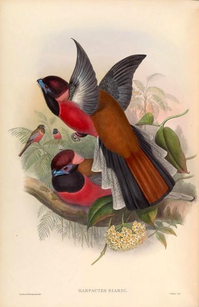High Resolution Vintage Bird Prints Vol, 1 Birds of Asia - Download