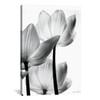 iCanvas ''Translucent Tulips III'' by Debra Van Swearingen Gallery-Wrapped Canvas Print~WAC3267-1PC3