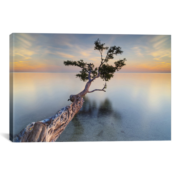 iCanvas ''Water Tree XIV'' by Moises Levy Gallery-Wrapped Canvas Print~MOL11-1PC3