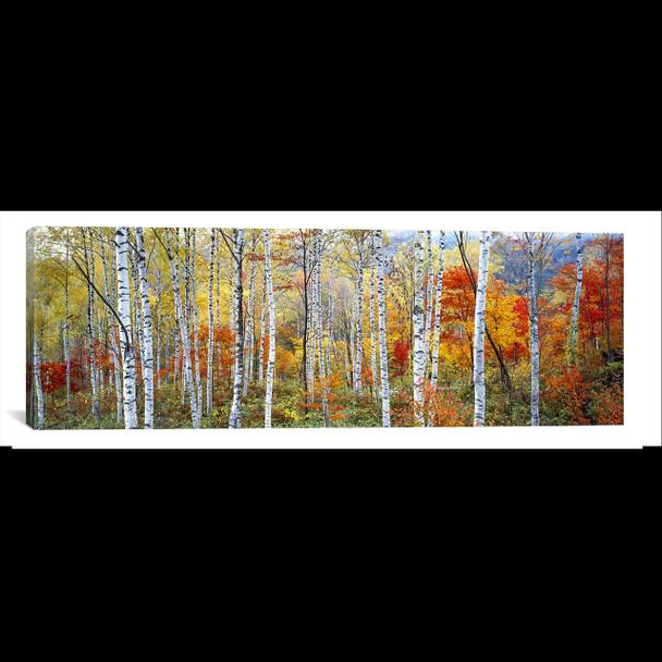 iCanvas ''Fall Trees, Shinhodaka, Gifu, Japan'' by Panoramic Images Gallery-Wrapped Canvas Print~PIM2427-1PC3