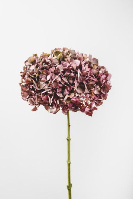 Cone Protea Ceramic  Vase