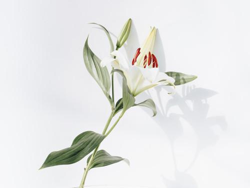 Gansgras Wildflower Ceramic Vase